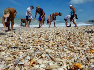 shell collector beach combers