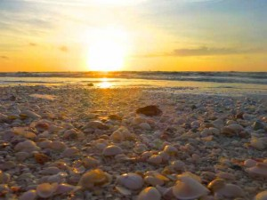 shells at sunrise sanibel point