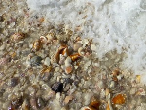 waves of seashells