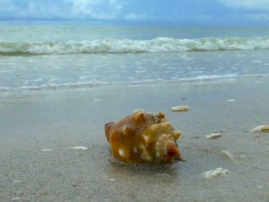 fighting conch beach tip