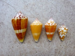 florida cone colors