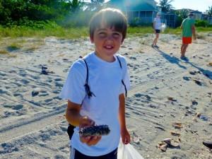 grant puffer fish