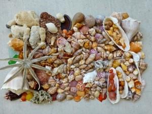 seashells huricane isaac