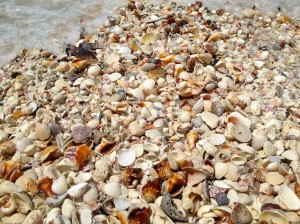 virtual cyber shelling seashells