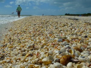 Clark sanibel seashell pile