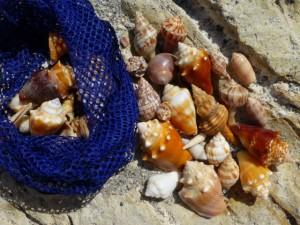 garrett shells blind pass florida