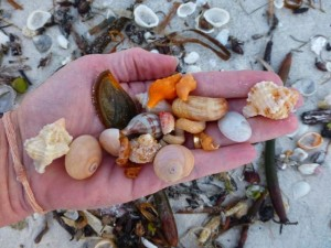 hand full of seashells lighthouse