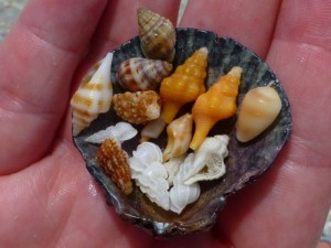 mary beth mianiature shells