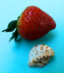 sanibel strawberries
