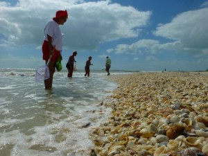 seashell collecting hurricane sandy sanibel