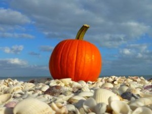 seashell pumpkin october Sanibel