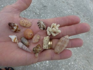 Mary Ann miniature seashells