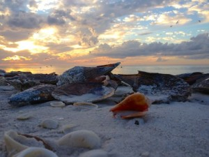 bonita springs sunset conch shell