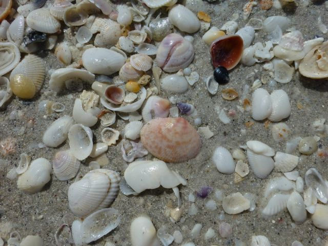 Seashells, Beach Bling and …. Red Tide