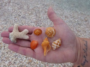 coral bittersweet candy seashells