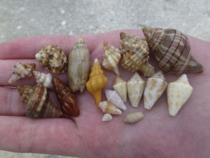 deseray seashells sanibel