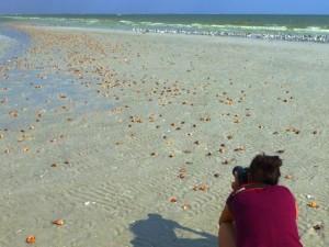 miyuki photos seashells birds sanibel