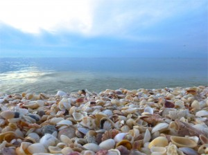 sea shell beach captiva island