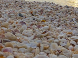seashells captiva sanibel florida - Version 2
