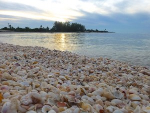 seashells captiva sanibel florida