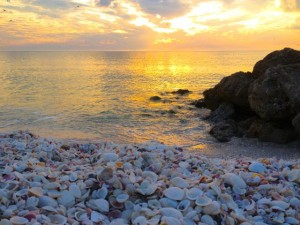 seashells sunset bonita springs