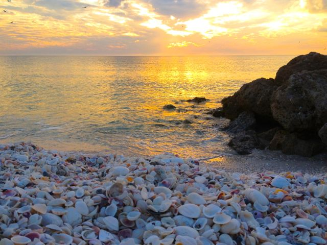 Little Hickory Sunset Seashells