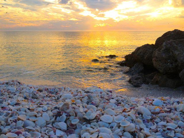 Little Hickory Sunset Seashells