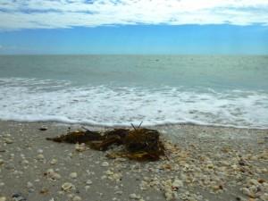 seaweed beach bling