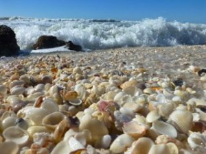 best beach florida seashells