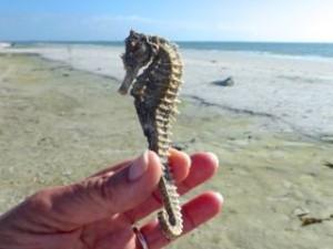 sanibel seahorse beach