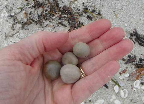 how to find pearls on the beach