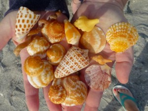 yellow oragne seashells cAPtiva florida