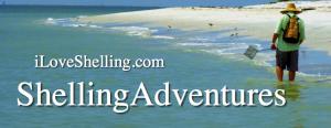 iLoveShelling ShellingAdventures