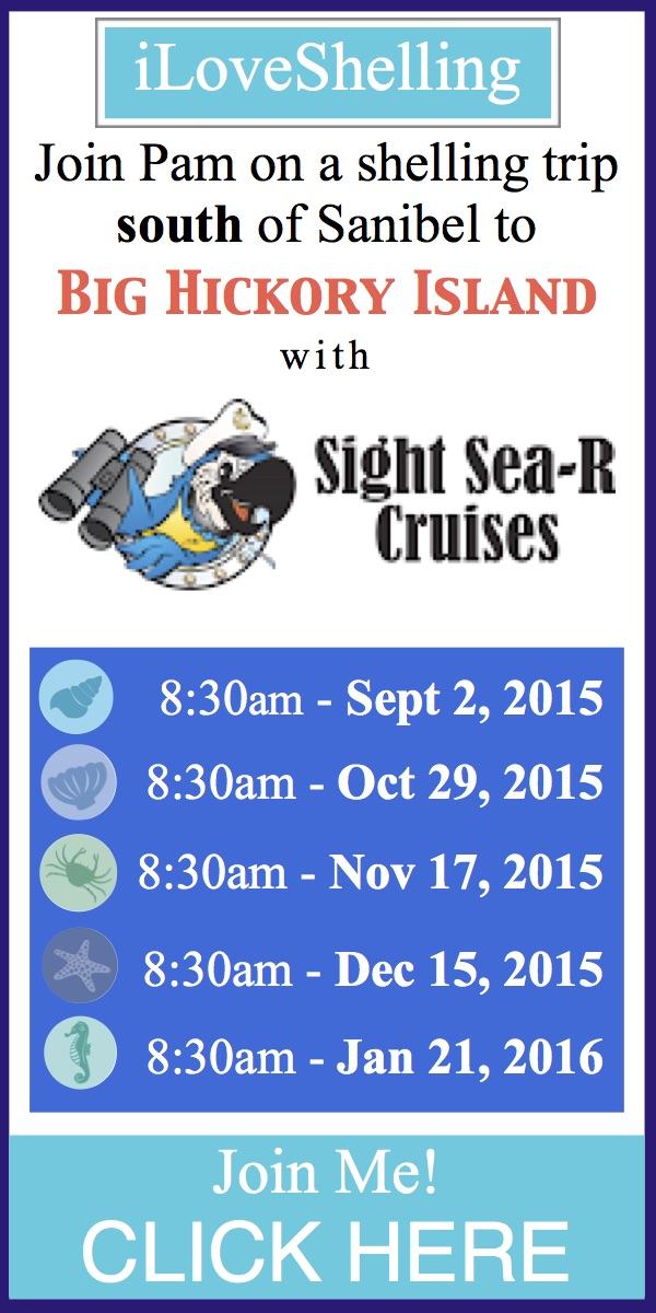 Sight Sea-R Jan 2016