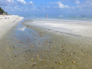 algiers low tide sanibel