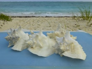 caicos conchs island