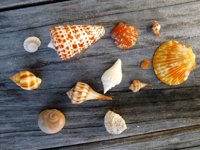 Seashell Show And Tell