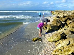 collecting seashells january fl