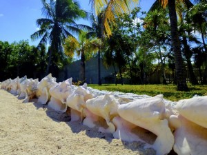 conch lined walkway