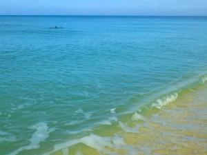 dolphins sanibel sea life