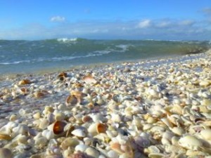 florida seashells beach