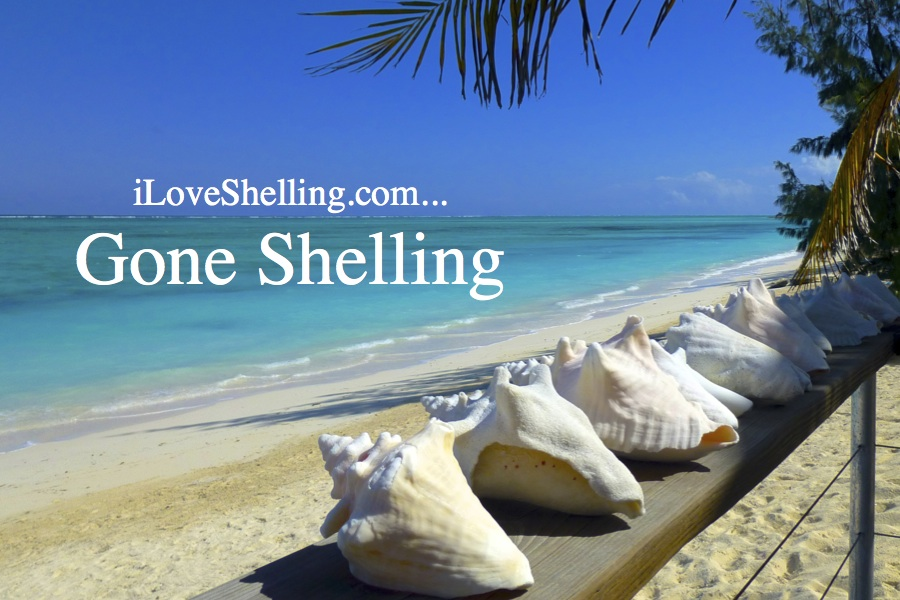 We're On Vacation….Gone Shelling