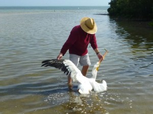 john checking pelican wing