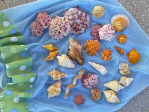 rambo seashells sanibel florida