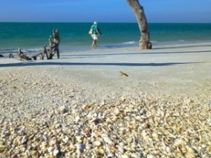 seashell beach florida