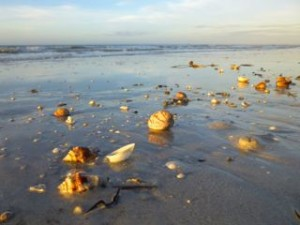 seashell strewn beach