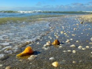 seashells on seashore