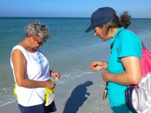 sharing shells