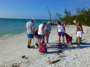 shell collecting cayo costa florida
