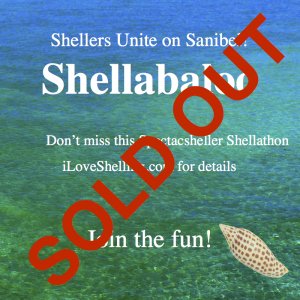 shellabaloo sOLD OUT